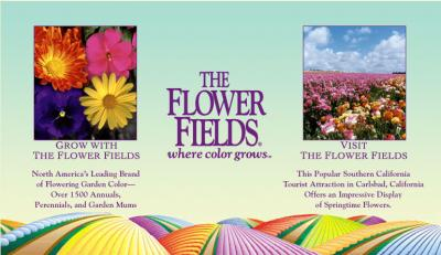 Full-Color Brochure